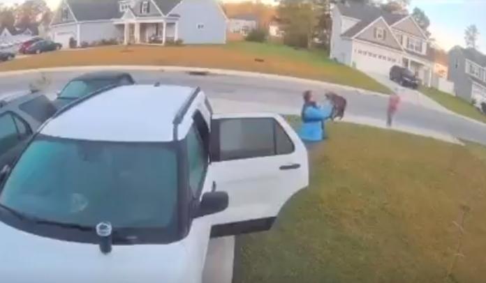 Bobcat attack video
