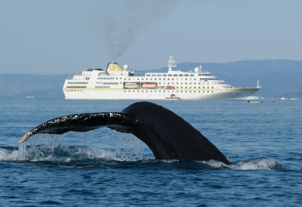Whale swallows man whole
