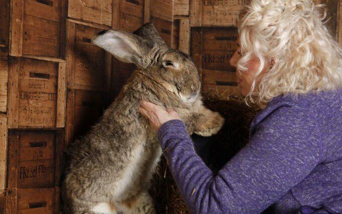 Playboy model bunny kidnapping