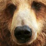 Profile picture of Eli Bear